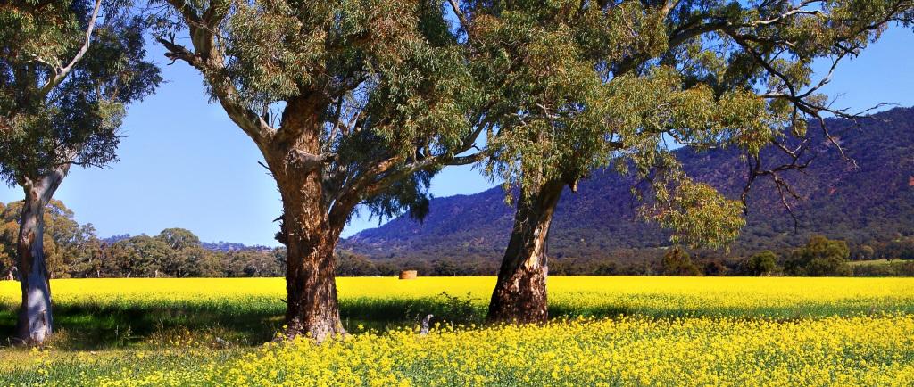 spring_fields